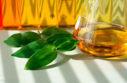 screening of cellulase producing fungi biology essay Cellulose is mainly degraded by cellulase enzyme which is commonly produced  by bacteria and fungi [6] the cellulases can effectively.